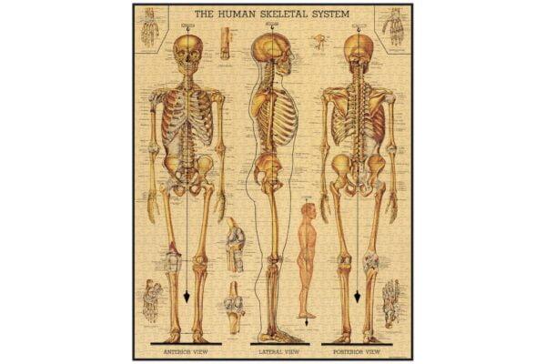 Vintage Puzzle - Skeletal System 1000 Piece - Cavallini & Co