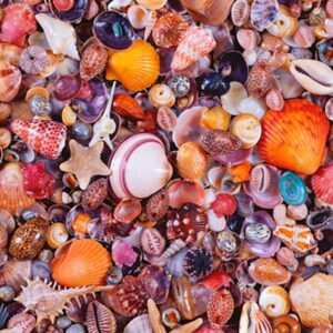 Seashells 1000 Piece Jigsaw Puzzle - Piatnik