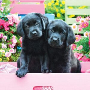Black Labs in Pink Box 500 Piece Puzzle - Eurographics