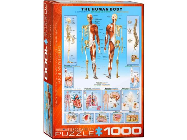 The Human Body 1000 Piece Puzzle - Eurographics