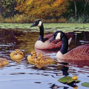 Platts Pond 1000 Piece Jigsaw Puzzle - Cobble Hill