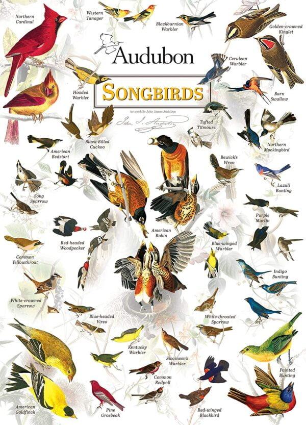 Poster Art - Audubon Songbirds 1000 Piece Puzzle - Masterpieces