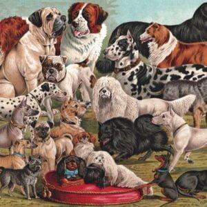 Dog Breeds 1000 Piece Puzzle