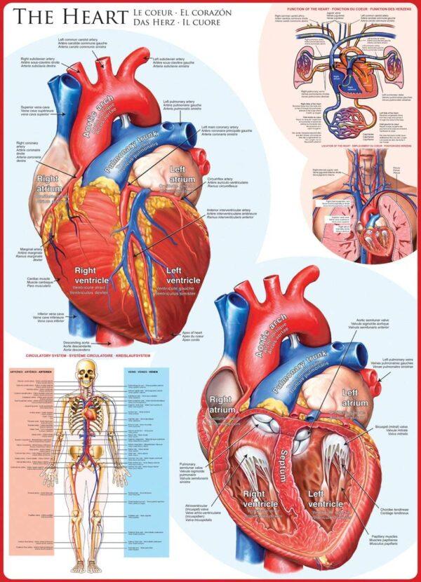 The Heart 1000 Piece Jigsaw Puzzle - Eurographics