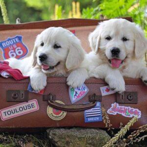 Travelling Puppies 100 Piece Puzzle - Ravensburger