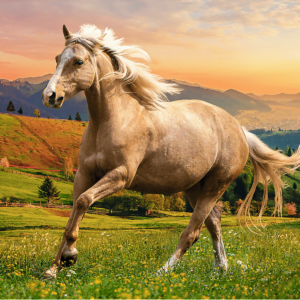 Afternoon Gallop in the Sun 500 Piece Puzzle - Trefl