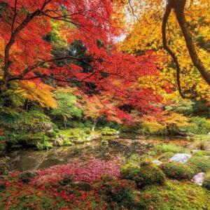 Autumn Park 1500 Piece Puzzle - Clementoni