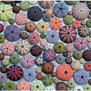 Sea Urchins 1000 Piece Puzzle - Piatnik