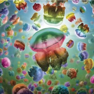 Jellyfish 1000 Piece Puzzle - Gibsons